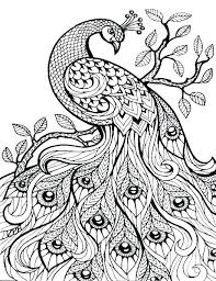 Peacock To Color Peacock Pictures To Color Also Peacock Pictures To