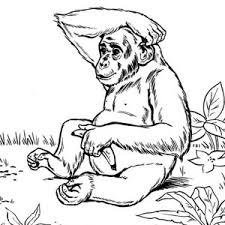 Small Picture Chimpanzee coloring page