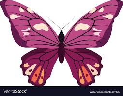 big pictures of butterflies. Delighful Butterflies Big Collection Of Colorful Butterflies Vector Image With Pictures Of Butterflies T