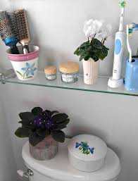 african violets like humidity the bathroom is a good spot for them