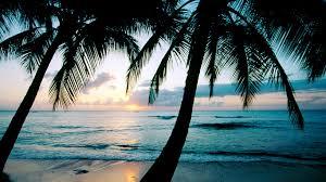 Twitter Headers Tumblr Palm Trees