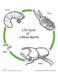 Small Picture Animal Life Cycle Coloring Pages Educationcom