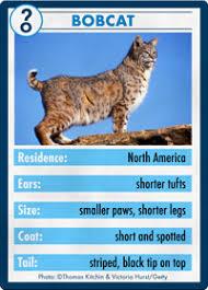 lynx size