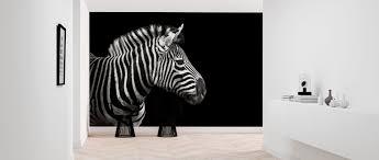 Zebra Populair Fotobehang Photowall
