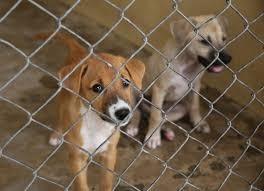 Image result for spca cat and dog