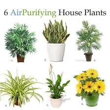 plants feng shui home layout plants. Creative Feng Shui Plants For Front Of House 8 Best Indoor Images On Pinterest Desert Home Layout W
