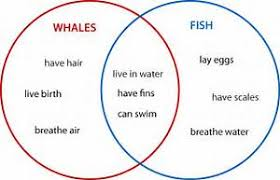types of classification essay topics help writing lyrics do my types of classification essay topics