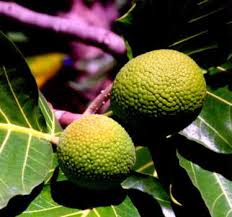 Introduction To Jamaican Fruits Vegetables And SpicesJamaican Fruit Trees