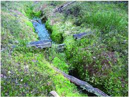drainage ditch a water gate and overgrown drainage ditch at the border of forest