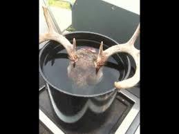 deer head skull mount diy european