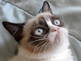 grumpy cat good smile. Modren Cat A Good Reason To Smile And Grumpy Cat Good Smile K
