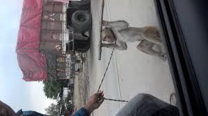 don t open door for monkey man watch or downvids net