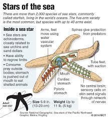 Starfish Chart Cogent Starfish Chart 2019