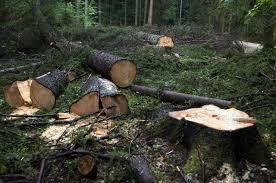 Image result for boskap staatsbosbeheer