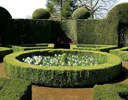 Small Picture 22 best Hedges images on Pinterest Hedges Gardens and Landscaping