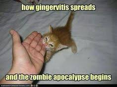 Zombie Memes on Pinterest | Zombies, Conspiracy and Stability via Relatably.com
