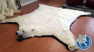 polar bear polar bear skin rugs