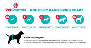 Belly Band Size Chart Pet Parents 3pack Premium Washable Dog Belly Bands Male