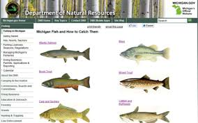 Finding And Identifying Fish In Michigan Resources That