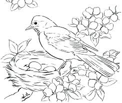 Bird Coloring Bird Coloring Pages Cornell Bird Coloring Book
