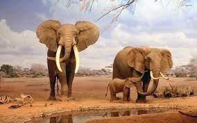 Elephant Wallpapers on WallpaperDog