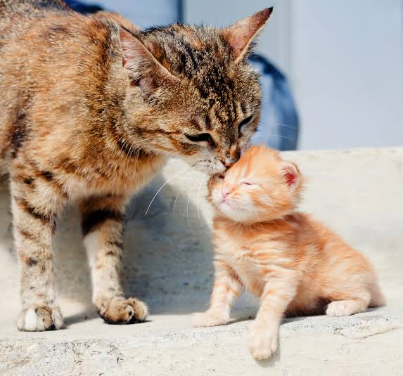 Image result for mom and baby kitten""