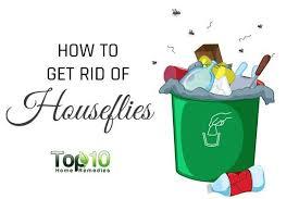 feat rid of houseflies