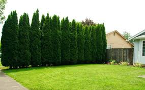 Tree landscaping ideas Olive Tree Landscaping Ideas Backyard Trees Landscaping Ideas Around Tree Landscaping Ideas Trinityk8info Tree Landscaping Ideas Backyard Trees Landscaping Ideas Around Tree