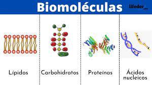 Biomoléculas: definición, funciones, clasificación