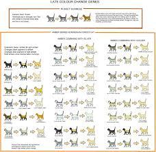 49 Unmistakable Kitten Growth Chart Weight