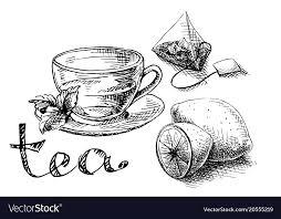 tea bag drawing. Unique Drawing Cup Mint And Tea Bag Vector Image To Tea Bag Drawing