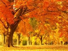 my favourite season autumn Моё любимое время года осень  my favourite season autumn