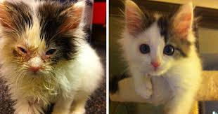 animal abuse cats. Fine Animal 15 Powerful Before U0026 After Pics Show How Rescue Can Change A Cat  Bored  Panda With Animal Abuse Cats