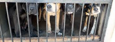 Image result for against puppy farms
