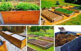 wood should be used for raised beds