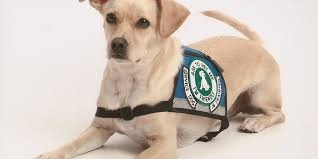 Emotional support animal real Airlines Tucson News Now Kold Investigation Service Dog Or Emotional Support Animal