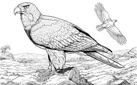 Small Picture Realistic Eagle Coloring Pages Coloring Page For Kids Kids Coloring