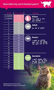 Age Of A Cat Chart Cat Age Chart How Old Is Your Cat In Human Years Janet