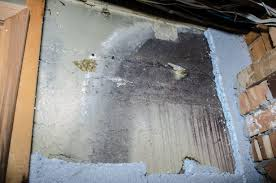how to tell if black mold is hiding in your walls