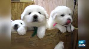 cute dogs and puppies. Brilliant And In Cute Dogs And Puppies