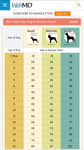 Puppy Age Chart Age Of Dog In Human Years Dogs Dog Age Chart Dog Ages