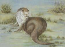 Otter Painting | eBay