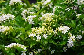 eight low maintenance plants that look