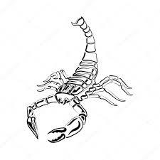 скорпион чб татуировка знак зодиака скорпион черно белый скорпион