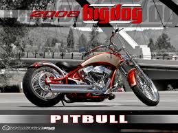 big dog pitbull best photos and information of model