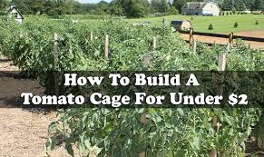 Diy tomato cage Wood Living Green And Frugally How To Build Tomato Cage For Under 2