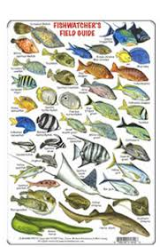 Fishcards Com Atlantic And Caribbean Fishcards Page
