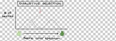 Directional Selection Natural Selection Diagram Stabilizing