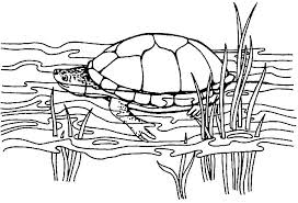 Kleurplaten Schildpadden Bewegende Afbeeldingen Gifs