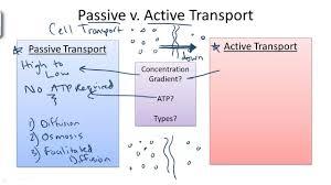 3 Types Of Passive Transport Passive V Active Transport